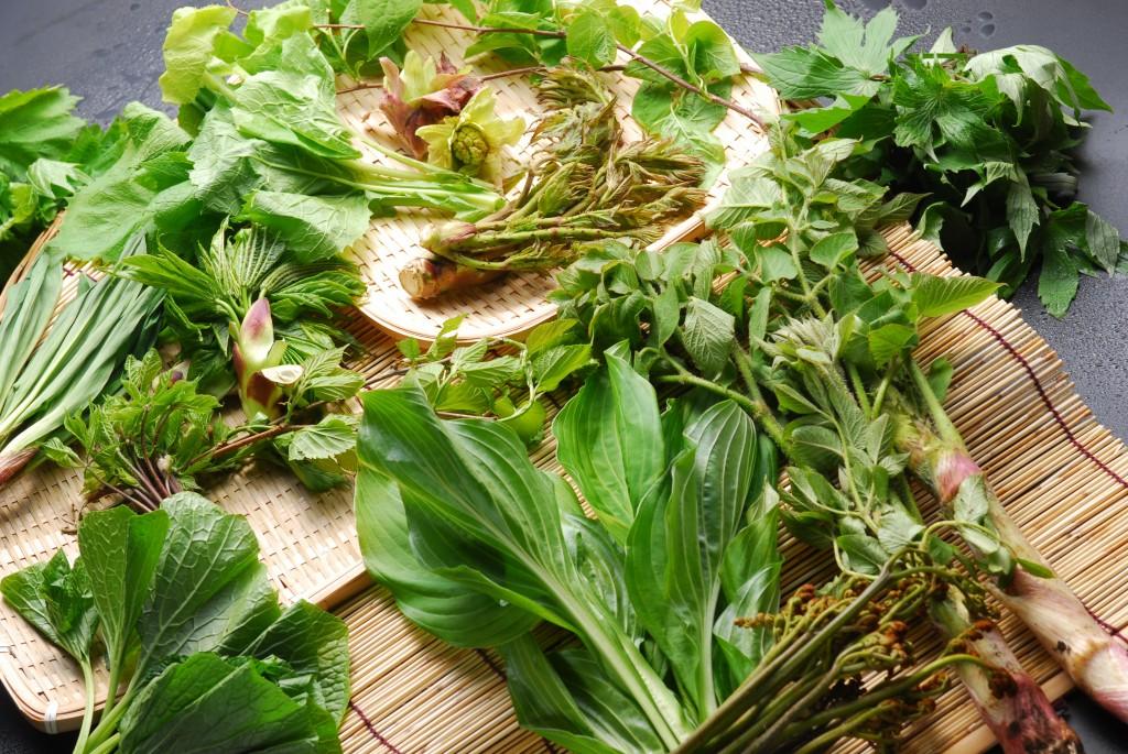 山菜(横)2